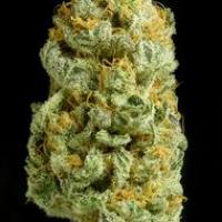 Critical Cheese Feminised Cannabis Seeds | Dinafem Seeds