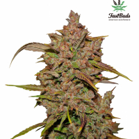 Crystal METH Auto Feminised Cannabis Seeds | Fast Buds