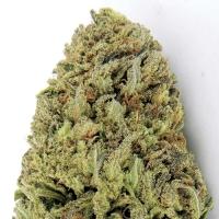 Fast & Vast Auto Feminised Cannabis Seeds | Heavyweight Seeds