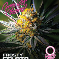 Frosty Gelato Auto Feminised Cannabis Seeds - Growers Choice