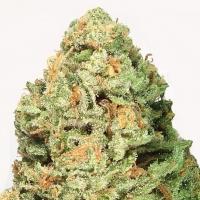 Fruit Punch Feminised Cannabis Seeds | Heavyweight Seeds