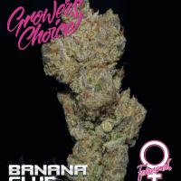 Banana Glue Feminised Cannabis Seeds - Growers ChoiceBanana Glue Feminised Cannabis Seeds - Growers Choice