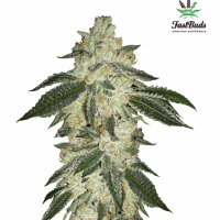 Green Crack Feminised Cannabis Seeds | Fast Buds