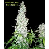 Hash Passion Regular Cannabis Seeds | Seedsman