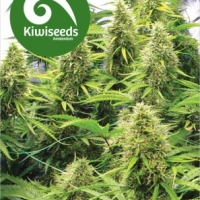 2 Pounder Feminised Cannabis Seeds