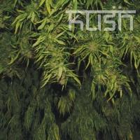 Afghani Kush Regular Cannabis Seeds | Kush Seeds