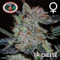 Big Buddha Seeds L.A. Cheese Feminised Cannabis Seeds For Sale