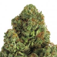 Midnight Mass Feminised Cannabis Seeds   Heavyweight Seeds