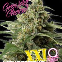 Monsterbud XXL Auto Feminised Cannabis Seeds - Growers Choice
