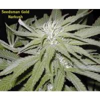 Seedsman Seeds | Cannabis Seeds Store