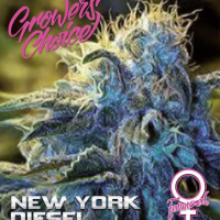 New York Diesel Feminised Cannabis Seeds - Growers Choice