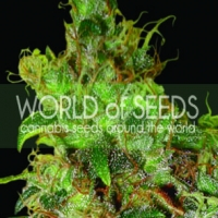 Northern Lights x Skunk Feminised Cannabis Seeds | World of Seeds