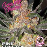 Pink Crystal Feminised Cannabis Seeds - Growers Choice