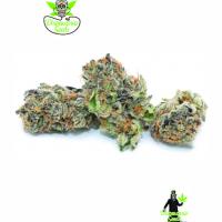 Rainbow Sherbet Feminised Cannabis Seeds | Dispensario Seeds