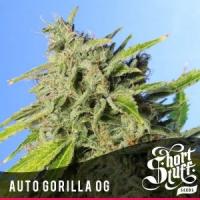 Auto Purple Gorilla Feminised Cannabis Seed | Short Stuff Seeds