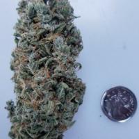 Sour Tsunami Regular Cannabis Seeds | BC Bud Depot