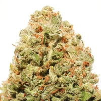 Strawberry Cake Feminised Cannabis Seeds | Heavyweight Seeds