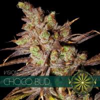 Choco Bud Feminised Cannabis Seeds | Vision Seeds