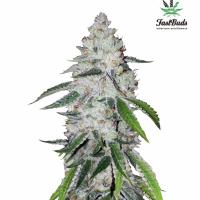 West Coast OG Auto Feminised Cannabis Seeds | Fast Buds